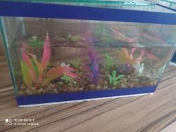 Dois aquários e redinha de brinde