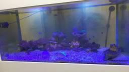 Aquário marinho (fauna)