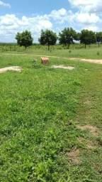 Chácara 8 hectares