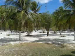 Rural - Graiá