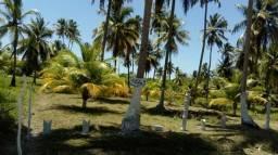 Sitio são Miguel dos milagres (povoado toque)