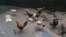 Vendo 7 galinhas caipira