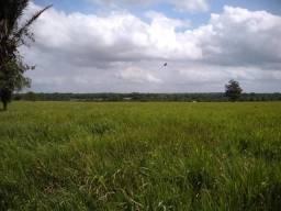 75 hectares a 60 km de Castanhal-Pará, por 650 mil reais