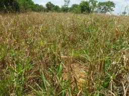 Fazenda pra arrendar a 50 km de BH ótima localização!