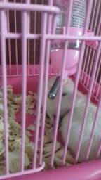 Vendo duas ratas com tudo!