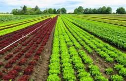 WM- Fazenda para plantio em Rondonia