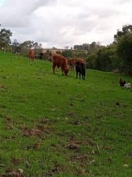 R-433 vendo Chácara completa de porteira fechada com 22 hectares na Santa Eulália Pelotas