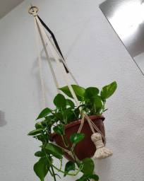Suporte de planta