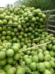 Título do anúncio: Promoção coco verde da bahia!! Entregamos