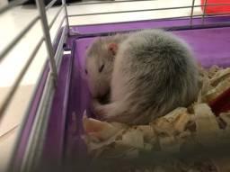 Vendo 2 ratinhos twister+ gaiola com dois andares  + Serragem