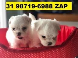 Canil Cães Filhotes Premium BH Maltês Poodle Yorkshire Lhasa Shihtzu Pug Beagle