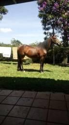 Egua argentina 7\8 venda ou troca