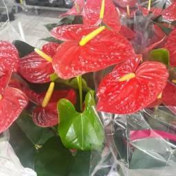 Planta ornamentais