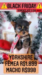 Lindo Presente!!!!! Yorkshire