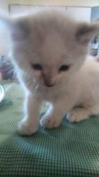 Título do anúncio: Gatinhos lindos p doação