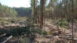 Madeira de Eucalipto R9,00/M3 - Média e Fina