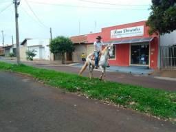 Egua mangalarga paulista