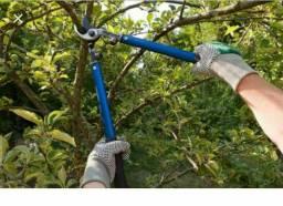 Cortamos suas árvores e podamos