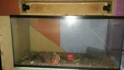 Vendo aquários de vários tamanhos