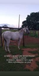 CAVALO QM REGISTRADO I
