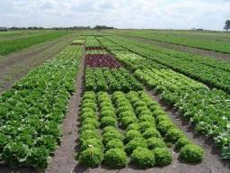 WM- Fazenda para plantio em Rondônia