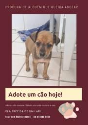 Cachorro abandonado, adote!!