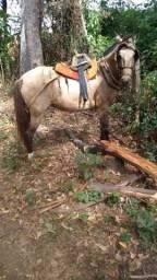 Vendo égua .muita mansa sem defeitos pra qualquer um andar e excelente na carroça