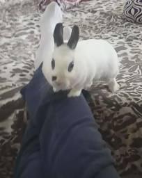 Mini coelho - doação