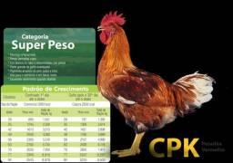 Avícola Pitanguá - pintainhos de corte e postura