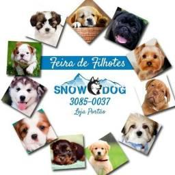 Promoção imperdível em nossa feira de filhotes no Snow Dog Portão