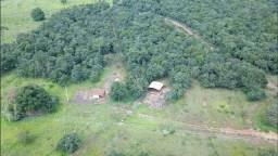 Fazenda 20 alqueires - Próximo BR-153 - Monte Alegre de Minas