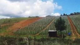 162C/Fazenda de 400 ha espetacular para agricultura e com irrigação