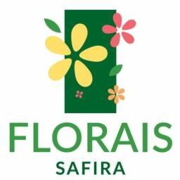 Lançamento Ginco Florais Safira