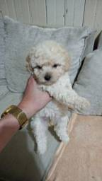 Poodle micro