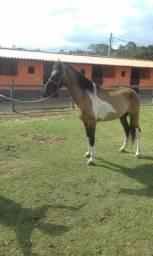 Oferta permanente de cavalos