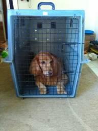 Caixa de transporte de cachorro grande
