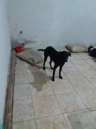 Estou doando este cachorro por falta de espaço.
