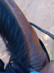 Vende-se cavalo de vaquejada