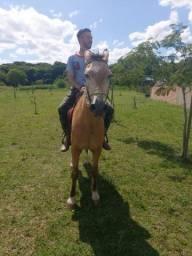 Vendo cavalo bom de montaria e vai na charrete