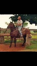 Cavalo Qm laço cabeça