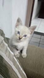 Lindo gatinho pra adoção