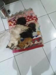Gatos pra doação