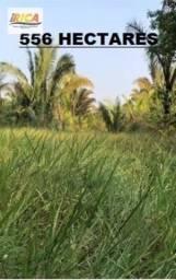Fazenda à venda com 556 Hectares, na Zona Rural do município de Humaita/AM