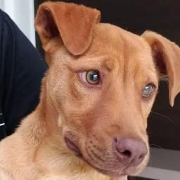 Doação de cão porte médio sem raça definida