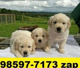 Canil Filhotes Cães Lindos BH Golden Dálmatas Pastor Akita Rottweiler Labrador