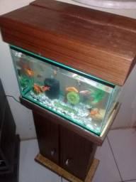Aquarios e acessorios