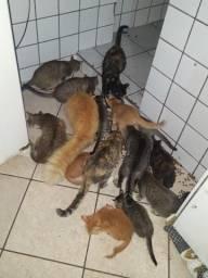 Estou doando gatos urgente