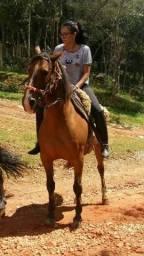 Égua crioula pura