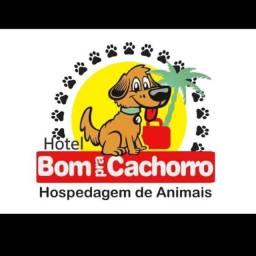Hotel Bom Pra Cachorro
