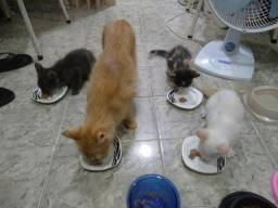 Filhotes felinos nascidos em 27/09
